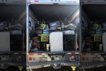 ¡Maltrato animal! Detenido por tener 28 animales hacinados en un camión