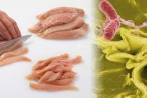 Brote de Salmonella vinculado a productos de pollo crudo