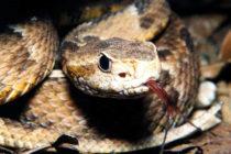 Autoridades alertan sobre presencia de serpientes venenosas en escuela de Pembroke Pines