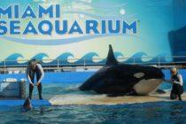 Hasta el 30 de noviembre veteranos de guerra entrarán gratis al Miami Seaquiarium