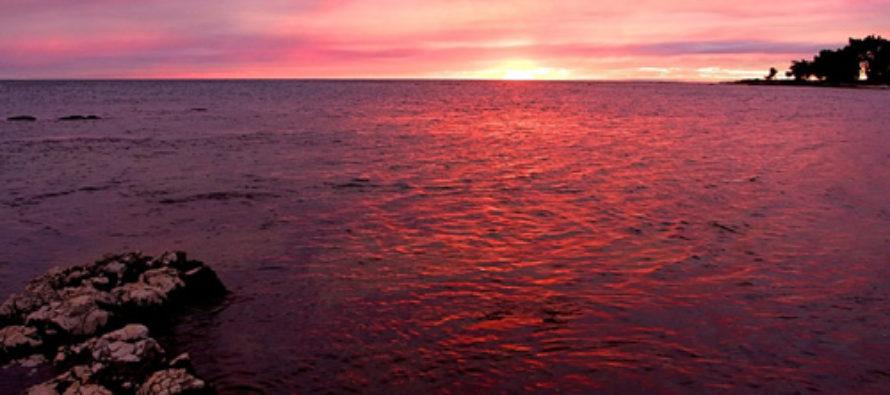 ¡Océanos candentes! Terrible consecuencia del cambio climático
