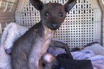 Mascota misteriosa llegó al Santuario animal de Florida