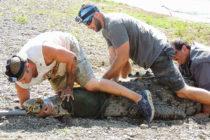 ¡Increible! Octogenario lucha contra un caimán y gana