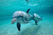 261 delfines murieron desde Louisiana hasta Florida en tres meses