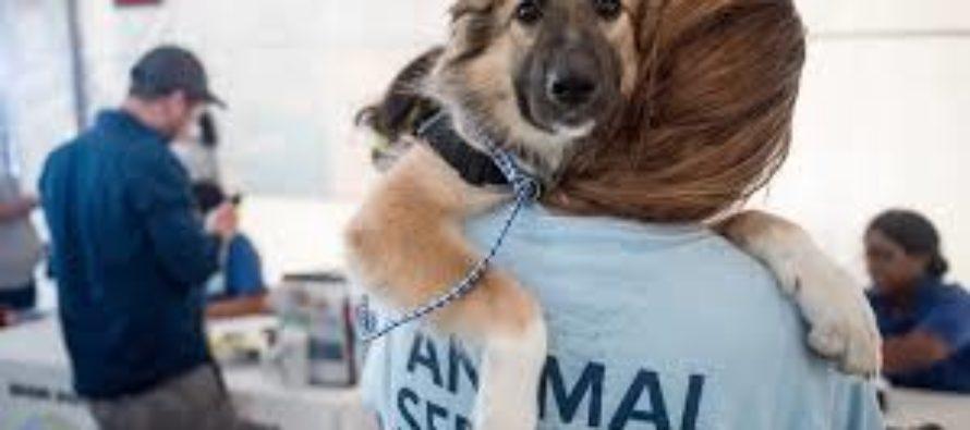 Miami-Dade te da la oportunidad de tener un Chihuahua en tu casa