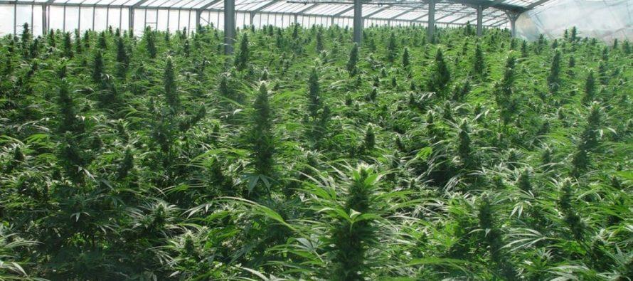 Presentan 2do proyecto de ley para acabar con la prohibición de fumar marihuana