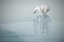 Calentamiento de océanos preocupa más a la comunidad científica
