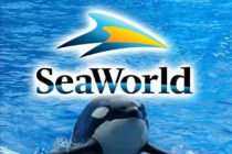 Informe: SeaWorld Entertainment Orlando podría pasar a manos de Six Flags