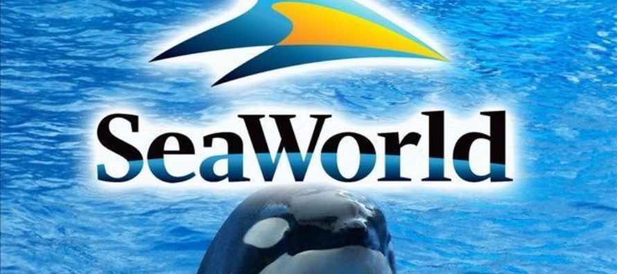 Informe: SeaWorld Entertainment Orlando podría pasar a manos de Six Flags