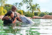Nadar con delfines está de moda en Discovery Cove