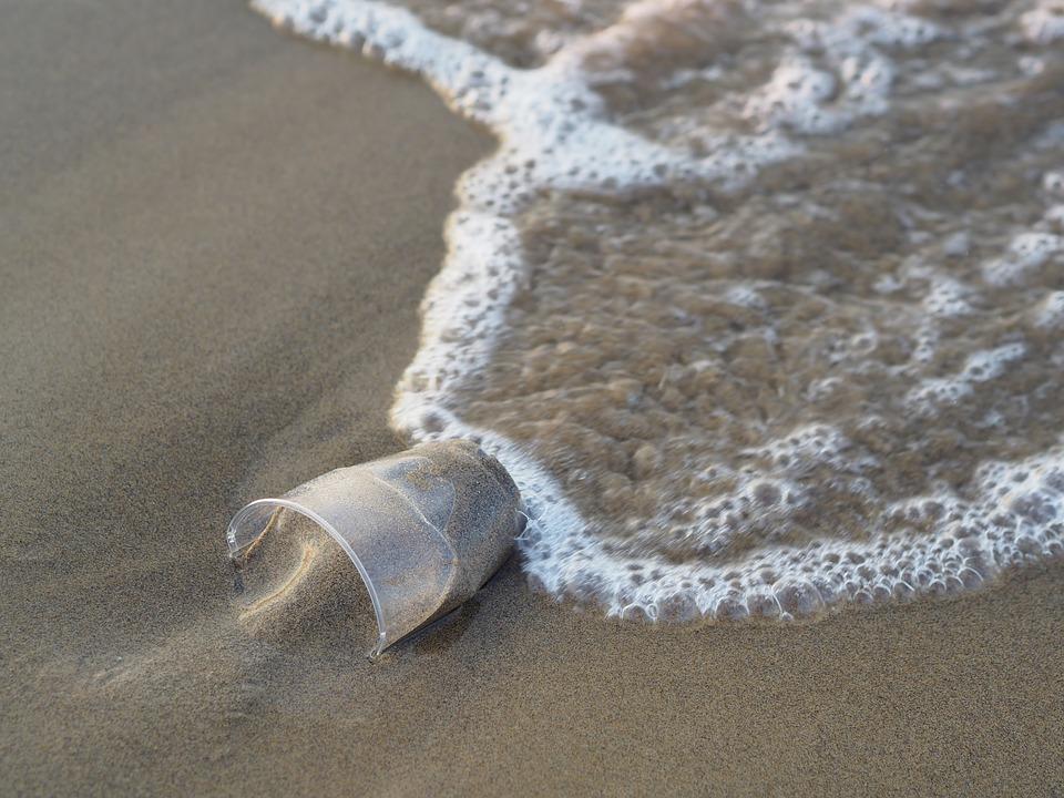 Encuentran a cachalote muerto con varios kilos de plástico en su estómago