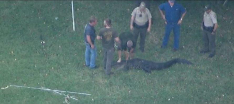 Turista canadiense salvó a hombre de Florida del ataque de caimán