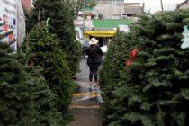 Miami lanza programa de reciclaje de árboles de Navidad
