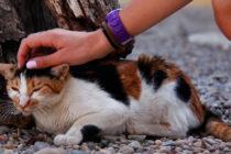 ¡Tiene que saberlo! Confirman que un gato en Hong Kong dio positivo por coronavirus