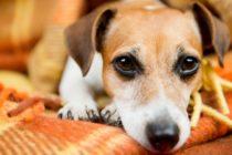 Miami-Dade invita a donar mantas para perros de refugios