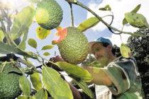 Agricultores de Florida afectados por acuerdo comercial con México