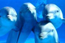 Marea roja de Florida mata a 16 delfines más