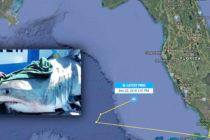 Atención: avistan tiburones blancos por las costas de Florida