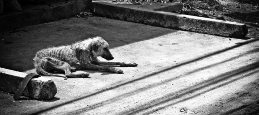 Aprueban proyecto de ley contra crueldad animal en Florida