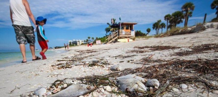 Científicos de Florida interrumpen las investigaciones sobre la marea roja por el cierre parcial del Gobierno