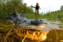 Con dificultad voluntarios mantienen parques nacionales de Florida funcionando