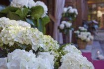 Flores del Este: el secreto de las mejores hortensias de Miami