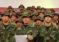 En Perú: Militares venezolanos desconocen a Maduro y respaldan a Guaidó