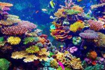 Prohibición de protectores solares con ingredientes dañinos para arrecifes de coral podría convertirse muy pronto en ley