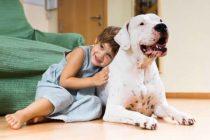 UniVista: Lo que tiene que saber antes de traer un perro a su hogar
