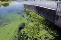 Camino libre para DeSantis: tres funcionarios más renuncian al Distrito de Administración del Agua del sur de la Florida