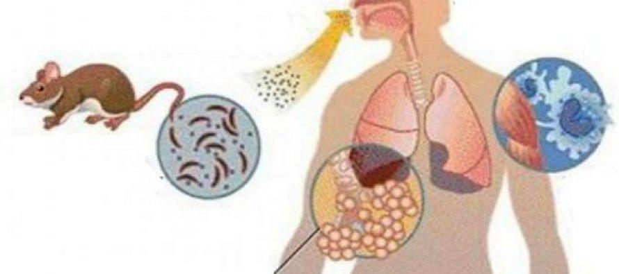 Autoridades sanitarias argentinas en alerta por brote de hantavirus