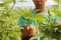 Regulaciones de la Florida sobre marihuana medicinal son inconstitucionales
