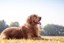 ¡Increíble! Nació un perro verde en Colorado (Video)