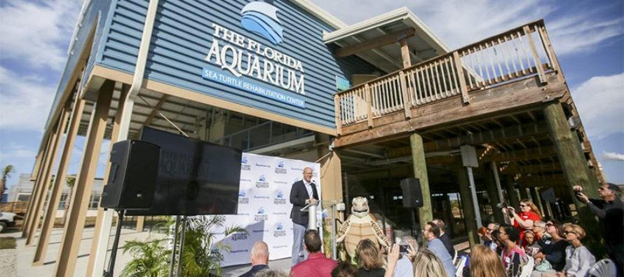 Aquarium de Florida abre centro de rehabilitación para tortugas