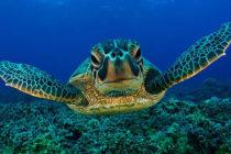 ¡Conozca una de las especie más antigua del planeta! Día Mundial de la Tortuga