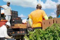 Proyecto de ley exigiría verificar estatus migratorio para nuevos empleados