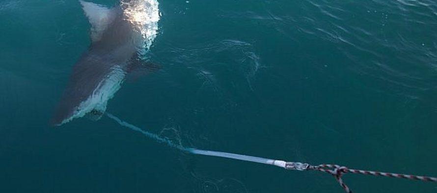 Tiburones se concentran ante una central térmica en Israel