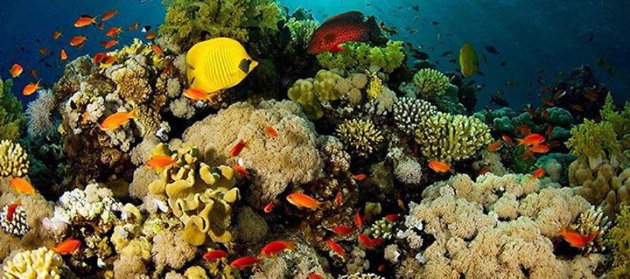 Terrible enfermedad devasta arrecifes de coral en Florida