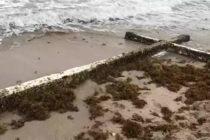 ¿Cuestión de fe?: una cruz llegó a las costas de Florida