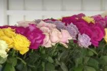 Arribó a Miami cargamento con flores frescas desde Colombia