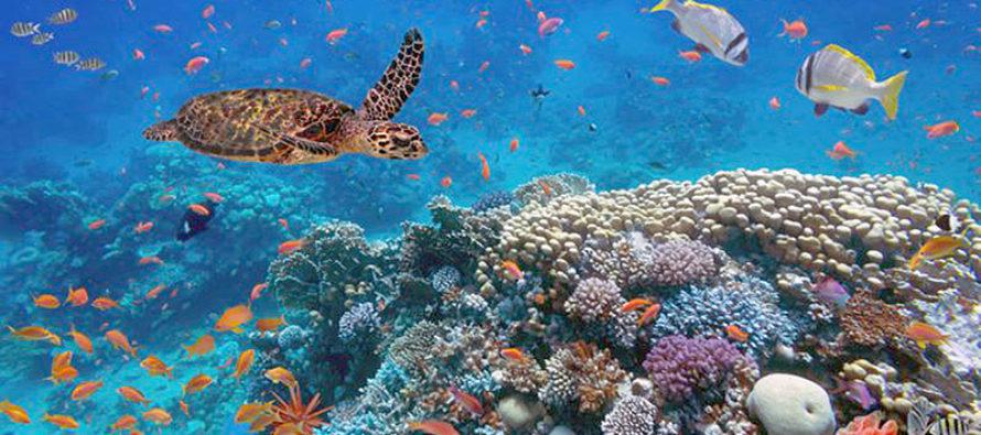 El cambio climático afectará gravemente hasta el color del mar