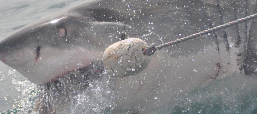 Se enfrenta a peligroso tiburón en inmediaciones de Key Biscayne y vive para contarlo