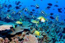Científicos alertan sobre una mancha de calor «asesina» que resurge en el Pacífico