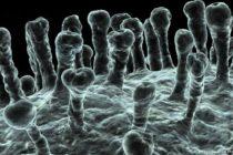 Desarrollo de vacunas contra el coronavirus podrían estar en tiempo record con nueva tecnología