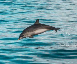 260 delfines nariz de botella hallados muertos en la costa del golfo de EEUU
