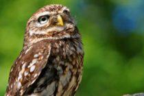 Ahora la ves y ahora no la ves, fotógrafo capta ave que se hace invisible