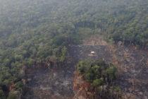 ¿Por qué arde la Amazonía?