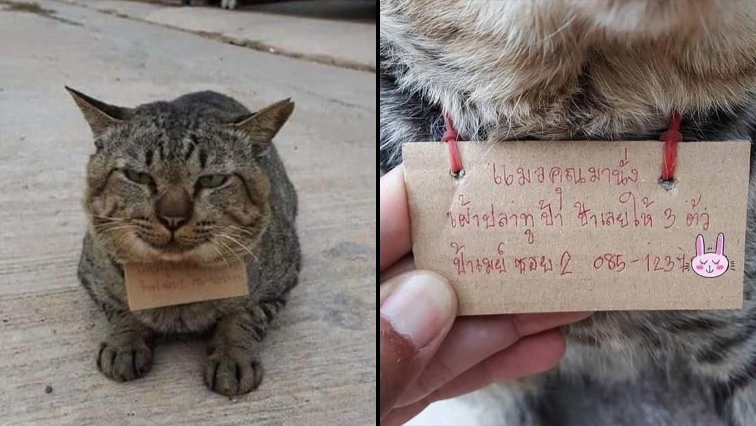 Gato desaparece y regresa endeudado por comer pescado