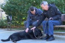 Una perra labrador se volvió viral al guiar a su dueño con Alzheimer hasta su casa