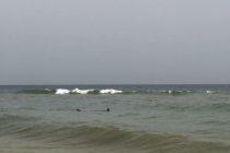 Bomberos en Navarre Beach reportaron la presencia de un tiburón martillo (+Fotos)